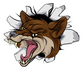 Coyote mascot break out