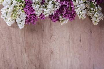 Fototapeta Kwiat bzu obraz