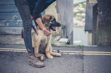 Young woman holding Leonberger puppy