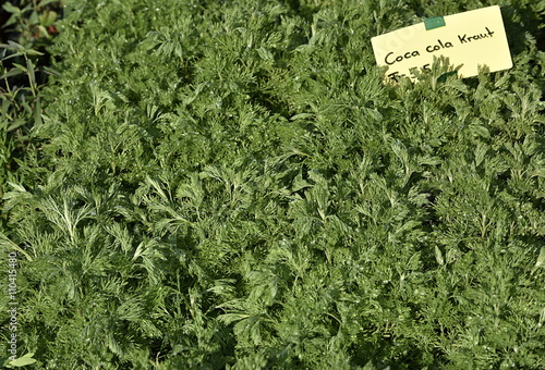 Plantes aromatiques stock photo and royalty free images on pic 110415480 - Plantes aromatiques cuisine ...
