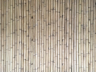 slim bamboo background