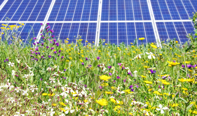 Photovoltaic panels and wild flowers