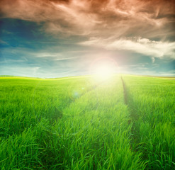 Image of green grass field and bright  sky