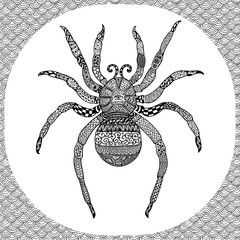 Coloring page of  Balck Spider, zentangle illustartion