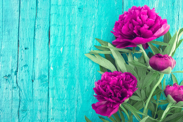 Red peony floweron turquoise rustic wooden background