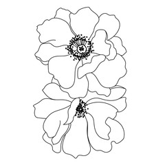 Vector monochrome anemone flowers isolated on white background. Element for design. Vector.