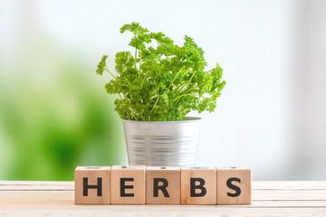 Herbs in a metal bucket
