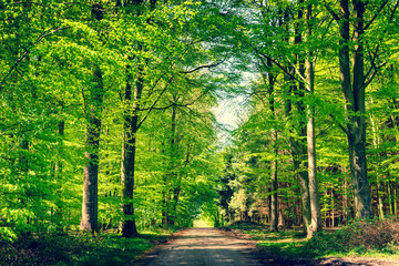 Road in a green forest in the spring