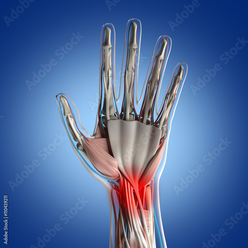 Human anatomy hand palm, joint pain in wrist. 3D Illustration ...