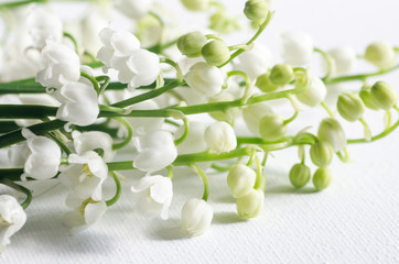 lily of the valley. Closeup, selective focus