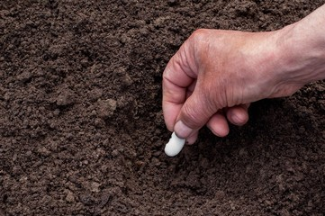 Male hand planting seeds in the ground