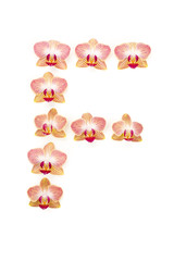 letter f of orchids
