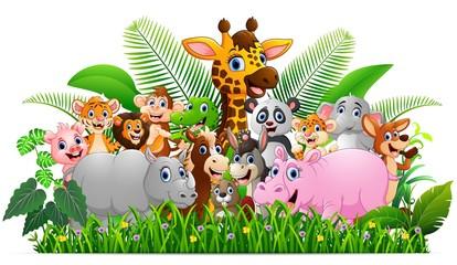 Collection animal safari in the jungle