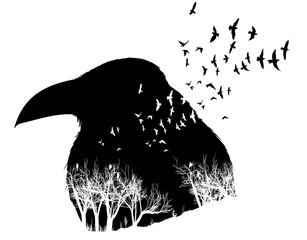 Raven illustration with double exposure effect.
