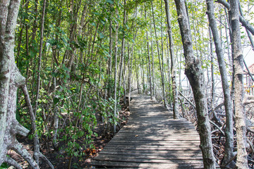 The forest mangrove in Trat city,Thailand