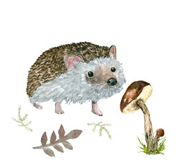 Hedgehog and mushroom. The figure of a hedgehog with mushrooms. Watercolor for design and printing.