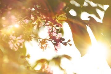 Summer Background / Hot Summer Season Flower Background