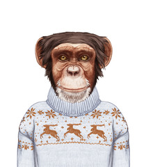 Animals as a human. Portrait of Monkey in sweater. Hand-drawn illustration, digitally colored.