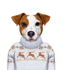 Animals as a human. Portrait of Jack Russell in sweater. Hand-drawn illustration, digitally colored.