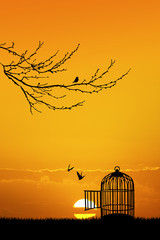 cage for birds at sunset