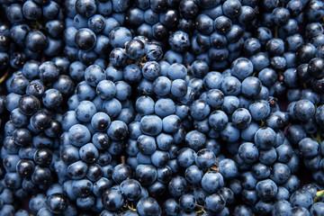 Draufsicht auf viele blaue Trauben, Konzept Wein Fototapete