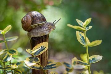 Wonderful snail macro photography in garden.  fairy tail garden