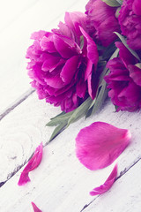 Pink peony flower on white rustic wooden background.