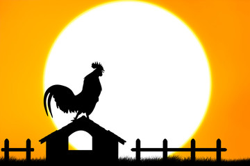 Roosters crow stand on housetop big sunset background