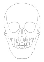 Isolated skull vector in EPS 8 format.