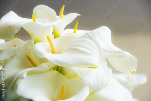 calla lilies close up immagini e fotografie royalty. Black Bedroom Furniture Sets. Home Design Ideas