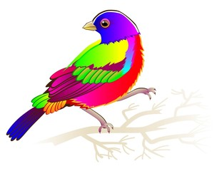 Illustration of painted bunting sitting on the branch, vector cartoon image.