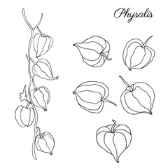 Physalis hand drawn doodle vector sketch isolated on white background, graphic berry set, Organic healthy food ingredients, black line art illustration, for healthy market, restaurant menu, cosmetics