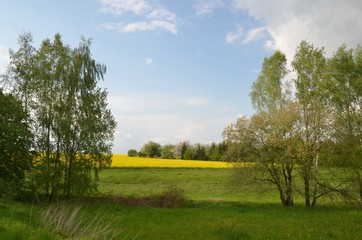 Idyllisch gelegenes Rasfeld am Waldrand in Hügellandschaft