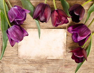 frame for pfoto or message from fresh tulips