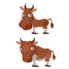 Brown cow and bull on a white background
