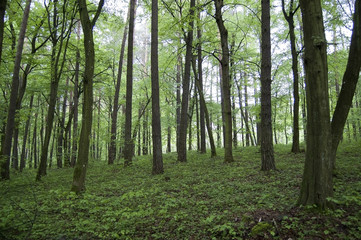 Trees on a knoll in the green forest