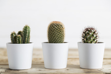 Three cactus plants