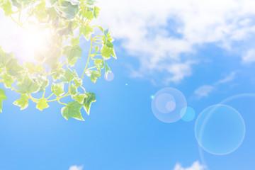 植物と青空