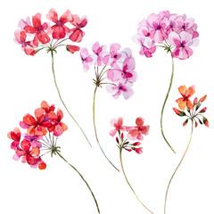 Watercolor geranium floral set