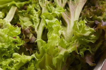 Fresh lettuce leaves in a bowl