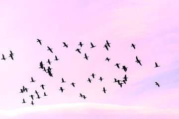 a flock of birds against the purple background