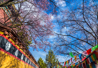 walkway and colorful prey flag with plum tree after raining