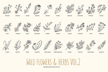 Wild flowers and herbs hand drawn set. Volume 2. Botany. Vintage flowers. Vintage vector illustration.