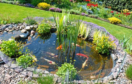 Teichanlage mit Koi-Karpfen im Garten