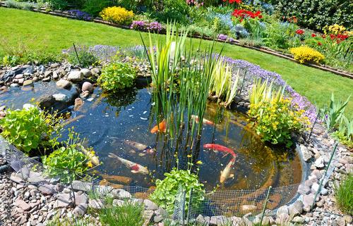 Teichanlage mit koi karpfen im garten stockfotos und for Karpfen im gartenteich