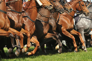 Horse racing action jumping from the starting gates