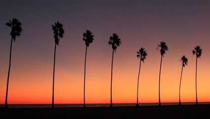 Row Of Palm Tress - Silhouette of a row of palm trees at sunset at the beach