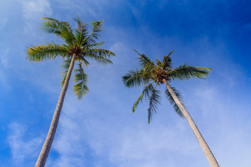 double coconut tree on The beach, kohchang, thailand