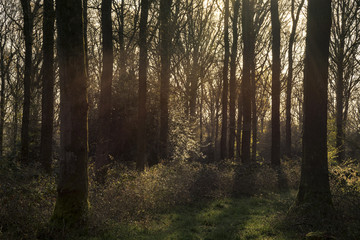 Stunning early morning forest landscape in Spring with sunlight