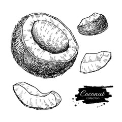 Vector hand drawn coconut set. Tropical summer fruit engraved st